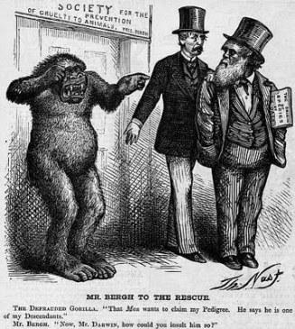 darwin cartoon, 1871